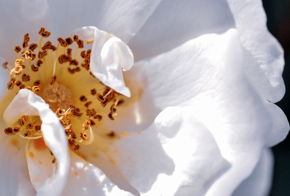 Macro photo of a white flower in local Botanical gardens
