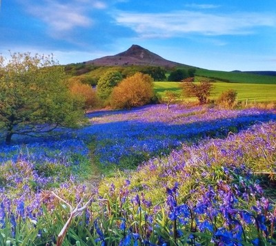 COLOURFUL COUNTRYSIDE