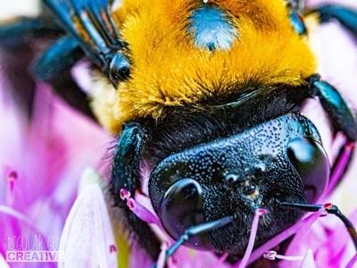 Bee's Eye