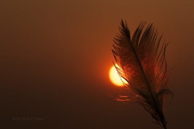 Feathered Sunrise
