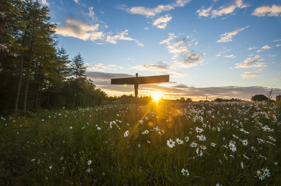 Angel of the North taken at sunset when the daisies are in bloom.