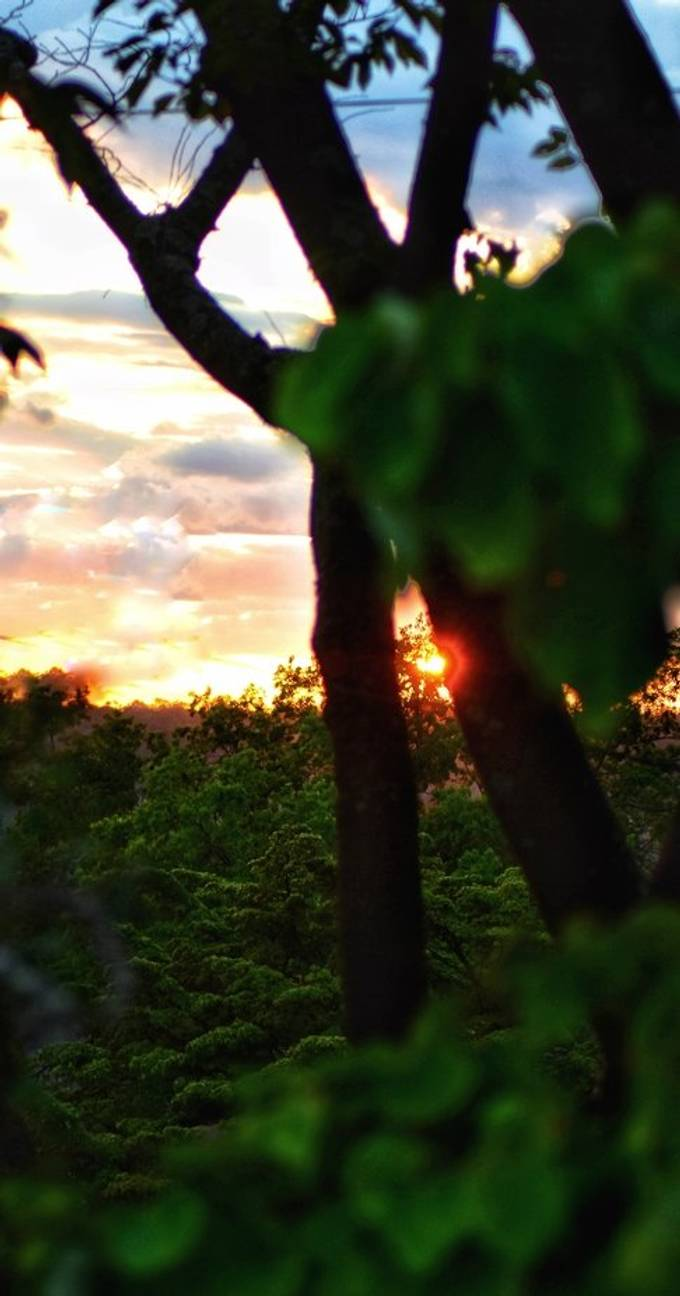 sunsetting peeking through the trees and vegetation at Untermeyer Gardens, Yonkers, NY