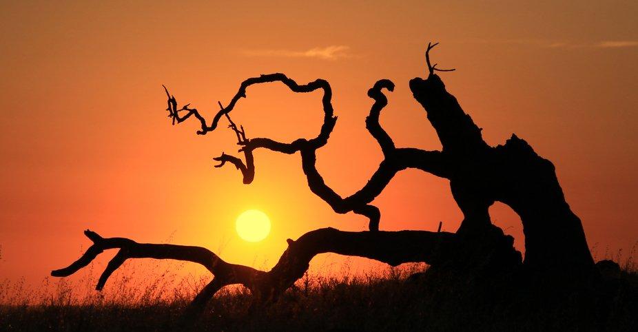 Sunset with Fallen Tree.JPG