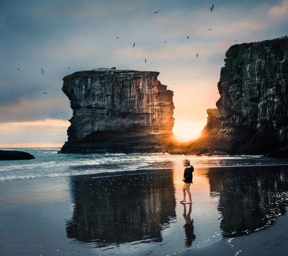 Gannet colony at sunset, Muriwai Beach, NZ.
