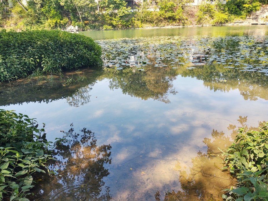 I took this picture while walking along the Finley River Park on the 9th of Sept, 2020. The thing...