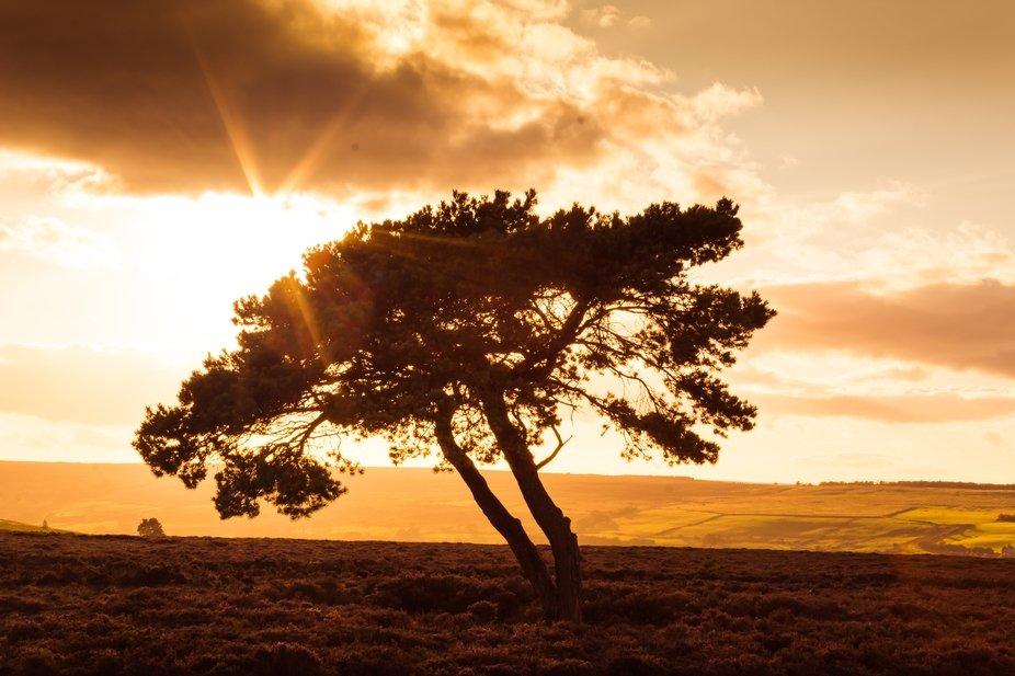 lone tree Egton