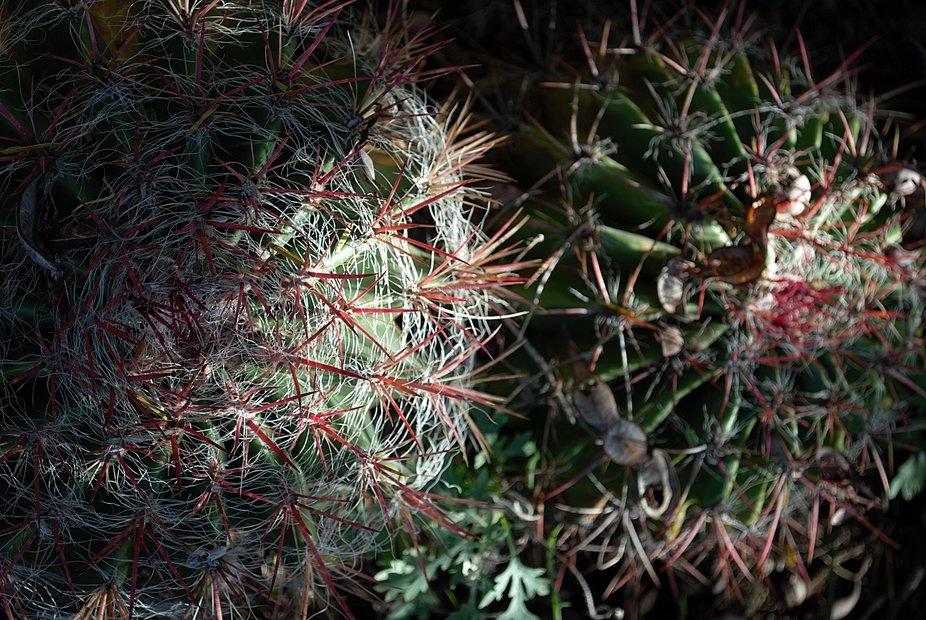 Arizona Cactus Fun