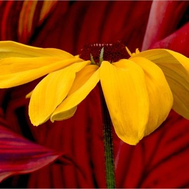 #410 - Yellow Flower