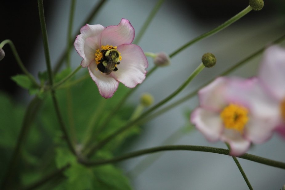PULEN TIME, SAVE OUR BEES