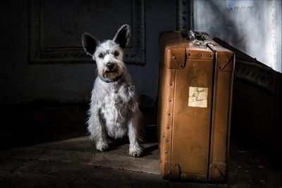 Il cane con la valigia
