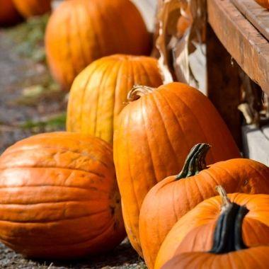 Pumpkins and corn husks