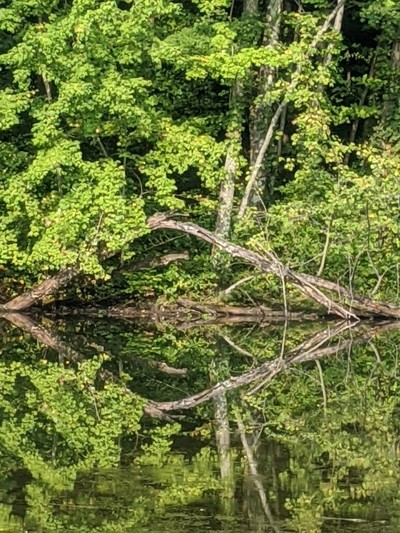 Hawthorn Park Reflection