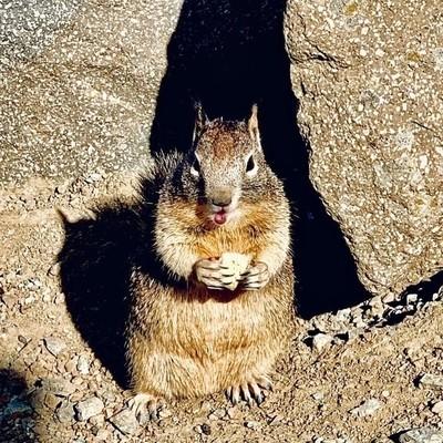 Kissy squirrel ???? #squirrel #squirrelsofinstagram #squirrellove #photograp