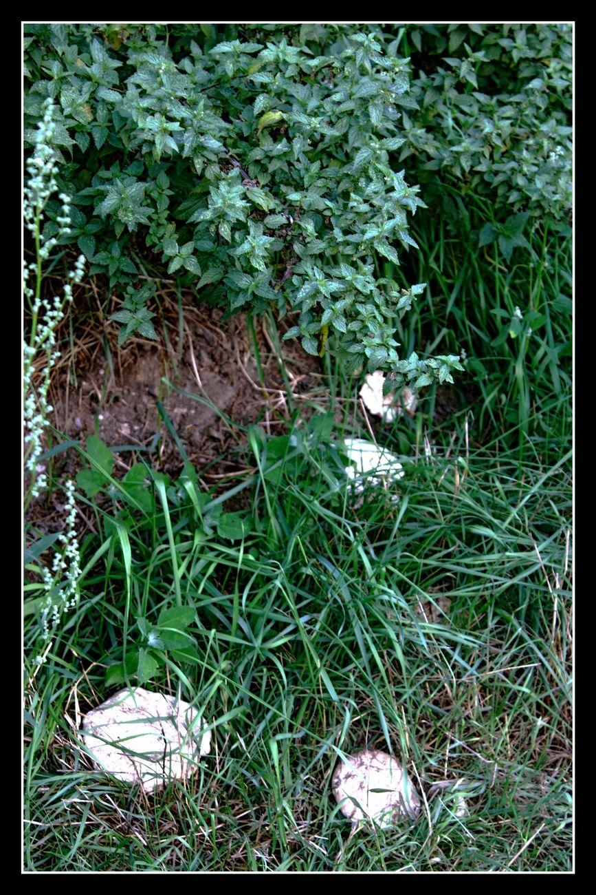 Early autumn walk in Tienen. Smallish Mushroom Theo-Herbots-Photography https://groetenuittienen.blog/
