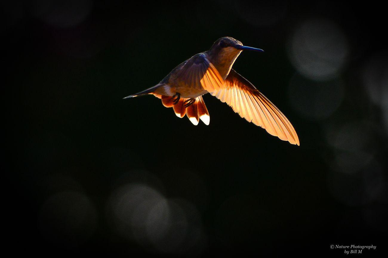 macro flight