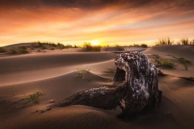 Hidden in the Dunes