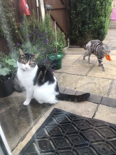 2 evil cats trying to get in