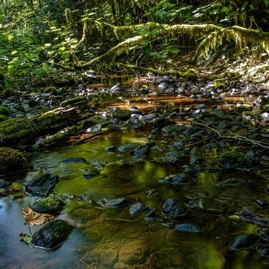 A stream in the the pacific northwest rain forest