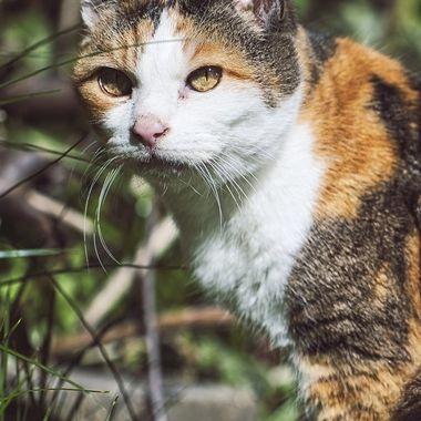 neighbour's cat.