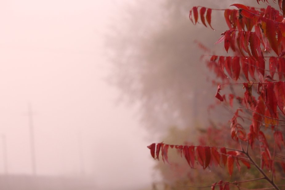 This was taken In the early morning just as the sun was beginning to rise on a, chilly, October m...