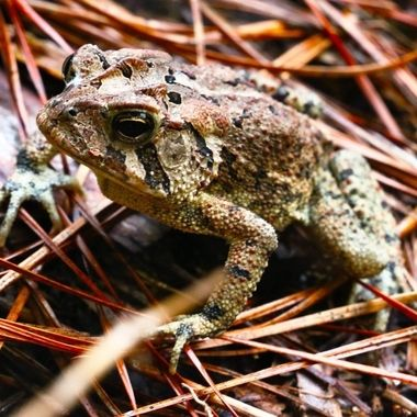 #naturephotography #wilmingtonnorthcarolina #canonphotography #canont6s #canonphotography📷 #frog #wildlifephotography