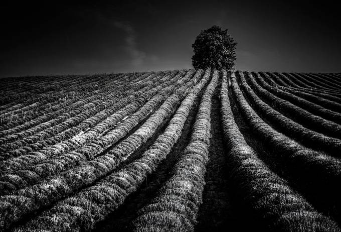 Night effect by livioferrari - Black And White Compositions Photo Contest Vol10