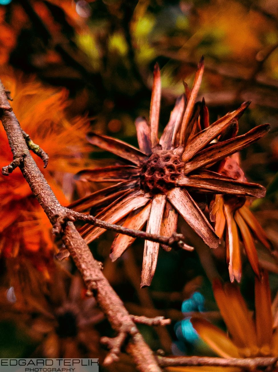 It looks like a star, with branches and leaves and green and orange tones in the background.