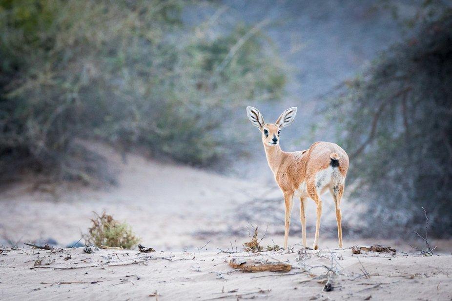 "Taken on safari in the desert regions of Namibia, where the safari was themed on ""Animal..."