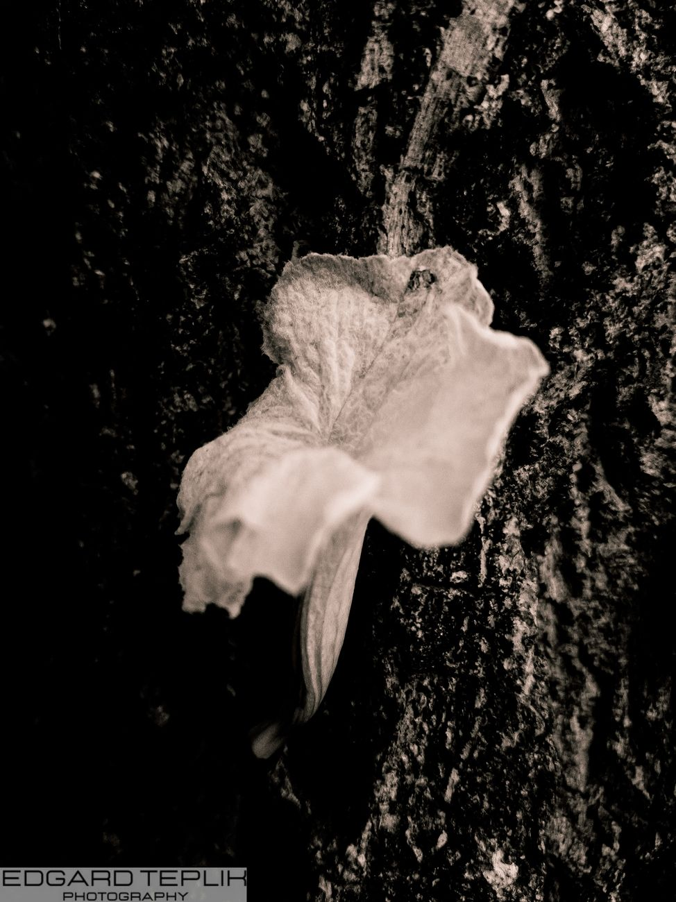A delicate flower, which fell with the wind, and got stuck in a tree trunk
