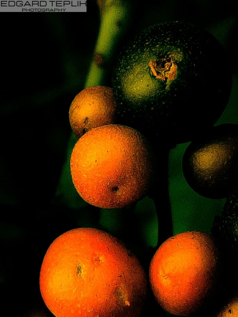 A beautiful contrast between small black fruits with orange tones, with a burst background.
