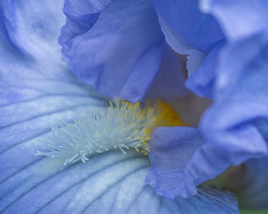 Looking done the throat of an Iris