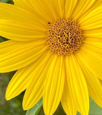 Wildflowers from Lady Bryd Johnson's wildflower center