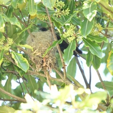 The nest in Final completion