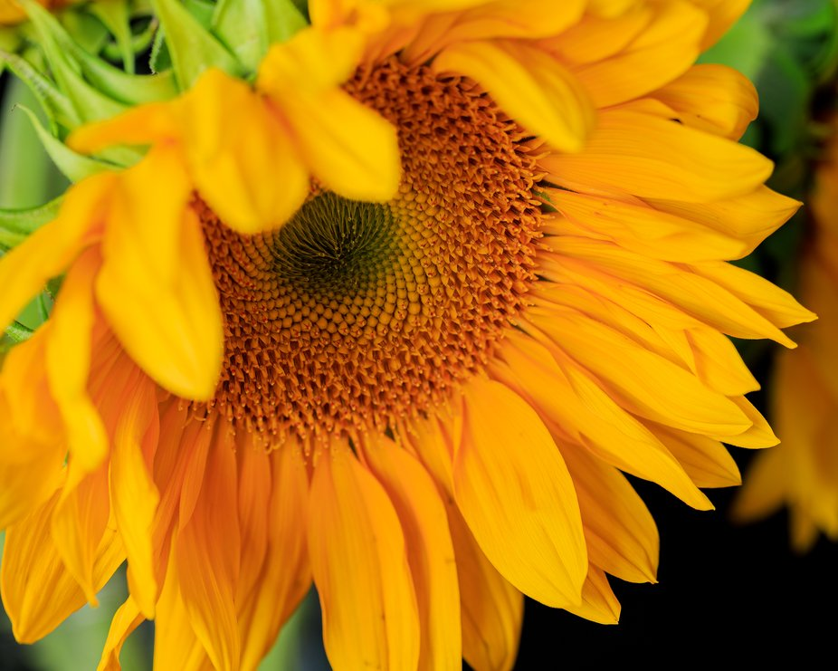 Another of my sun flower shots.