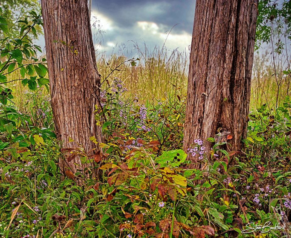 Cedar flower garden...