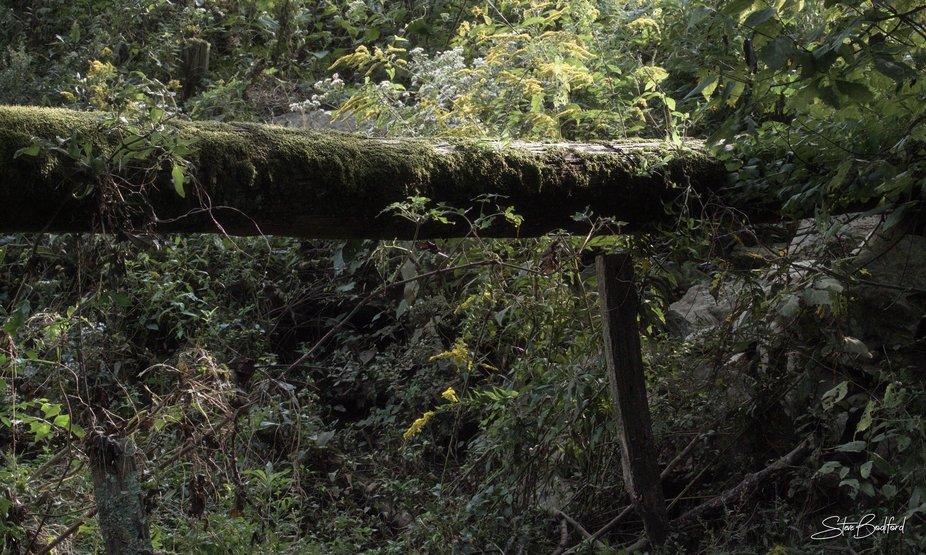 Mossy Log Crossing...