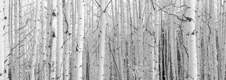21 images to make this pano with a Tamron 90mm f2.8 macro lens.  Kebler Pass Colorado