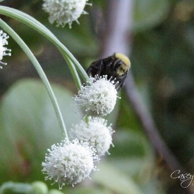 Bee meal