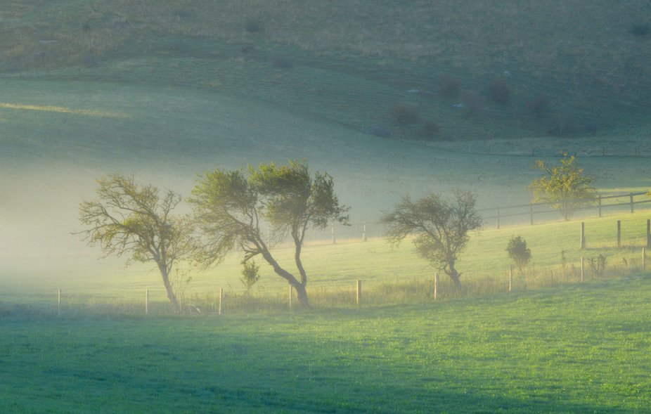On my way to photograph the Adur river valley I saw these trees hanging on to some low lying mist.