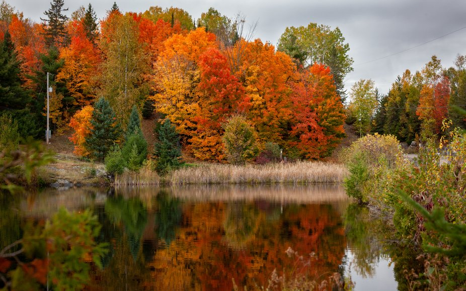 A quick look at an Eastern Ontario Fall scene from 2020. Sometime we have to look out the window ...