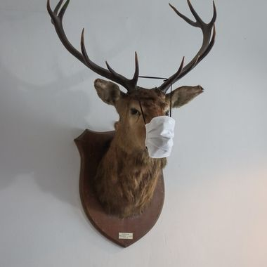 Keeping the taxidermy safe