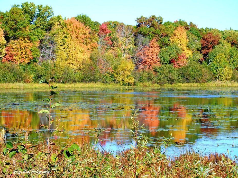 This scene was breathtaking through our drive through Isanti county this  morning10-4-20