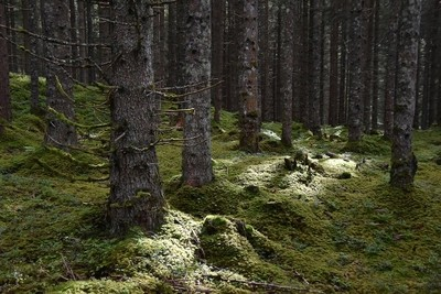 walk in the woods of Hollersbach, A