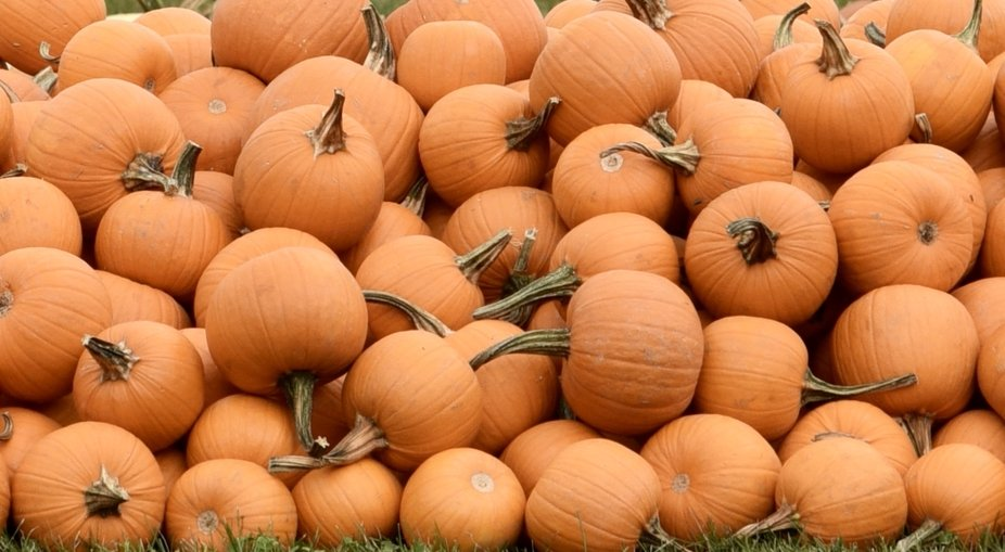 Yes we have Pumpkins !