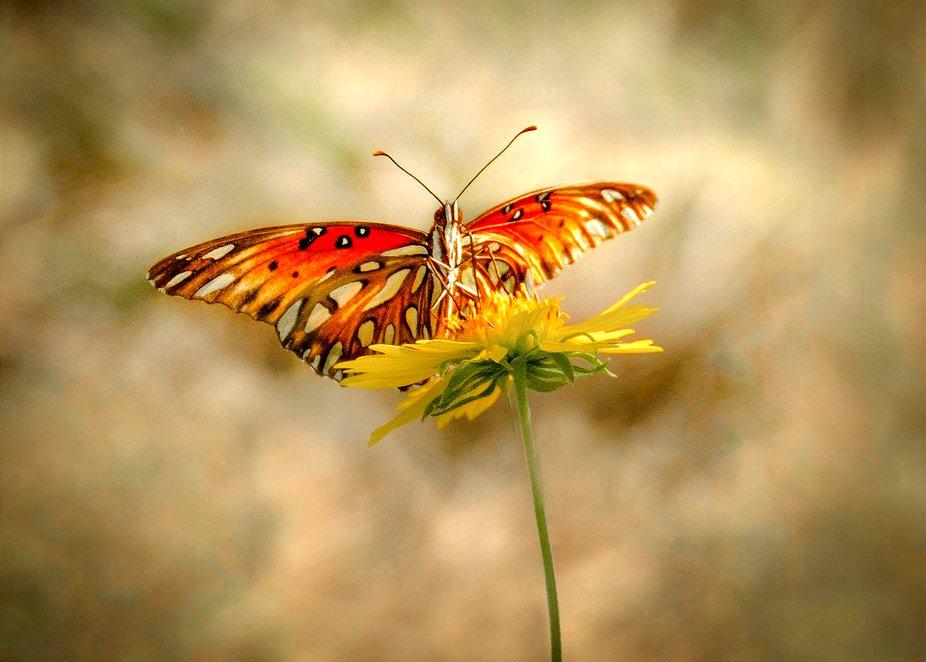 Majestic butterfly art copy