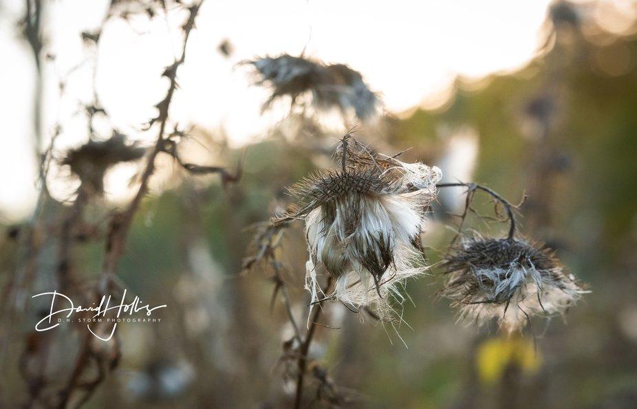Fall Descends on Whitnall Park