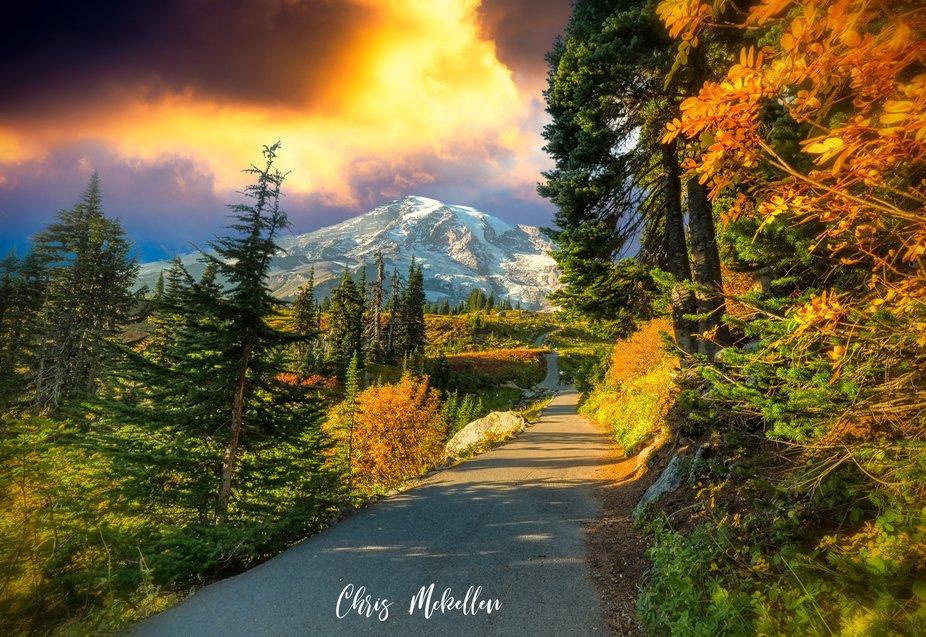 Paradise Park at Mt Rainier National Forest
