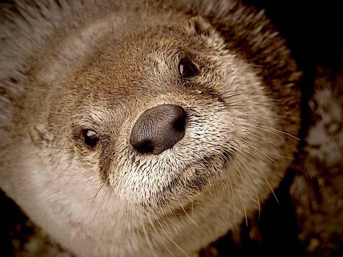 Otter on you  by edwardsikora - The Animal Planet Photo Contest