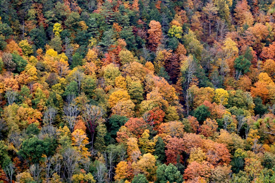 Pine Creek Gorge - the Grand Canyon of Pennsylvania stretches 50 miles and reaches depths of 1,00...