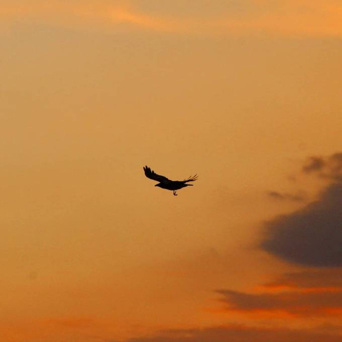 Free life  #canon #75300mm #Ireland #Kerry #flight #airplane #aircraft #bird #backlit #silhouette #sunset #evening #raptor #dusk #silhouetted #sky #eagle #dawn #wing #outdoors #takeoff #travel #traveling #visiting #instatravel #instago #hawk